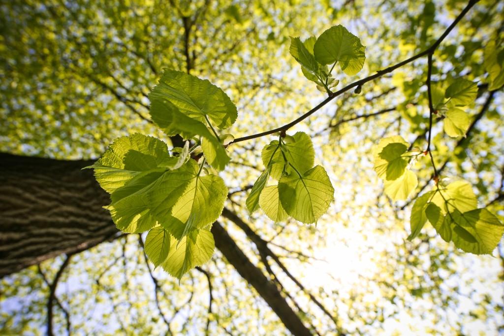 Tree Leaves BY VIKTOR HANACEK
